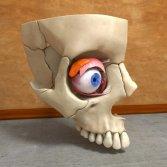 EyeSkull010_0006.jpg2370046a-ab9d-4486-b217-4f78fd99fe42Original
