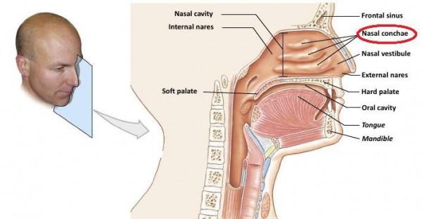 respiratory-system-notes-std-3-2011-6-728