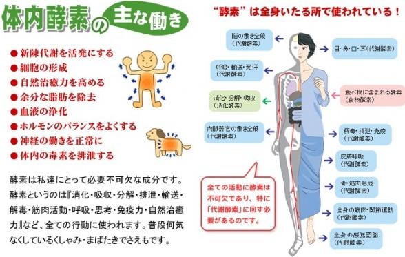 牛乳を分解する酵素を日本人は持ってない? 博学 …
